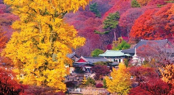 2018 年韓國楓紅將自 9 月底開始!要追楓的親姑們,準備出發囉! (含首爾市及全韓國賞楓景點介紹)