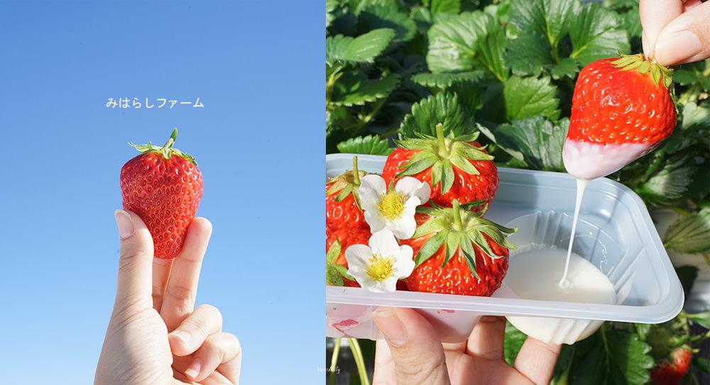 日本長野.景點 | 雪見草莓、草莓放題!Miharashi 農場草莓,不限時間自由採摘吃到飽