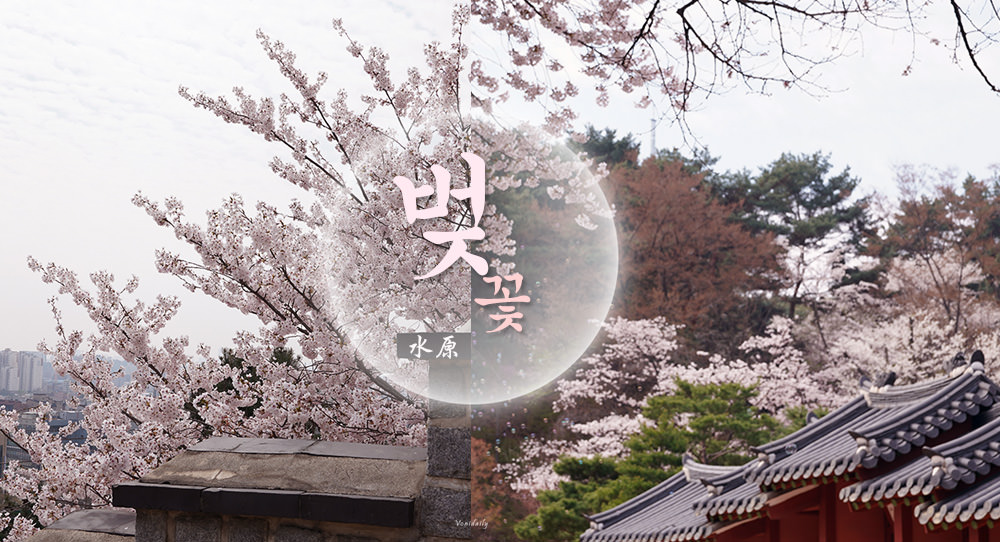 京畿道.景點 | 韓國京畿道賞櫻私房景點之一水原八達山,城郭美景一起穿越時空