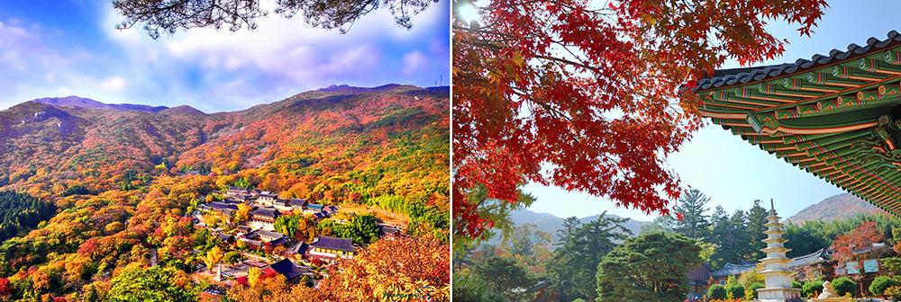 全韓國楓葉、銀杏景點行程規劃 釜山賞楓