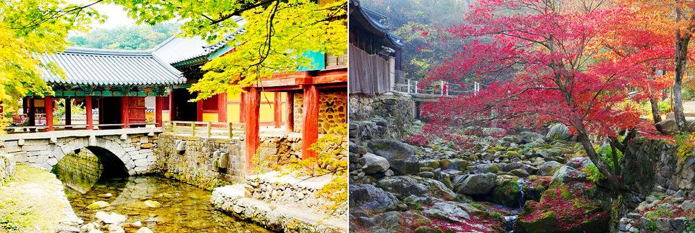 全韓國楓葉、銀杏景點行程規劃