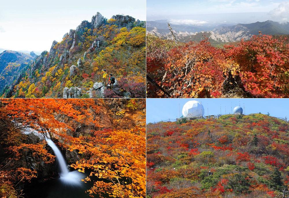 全韓國楓葉、銀杏景點行程規劃 雪嶽山