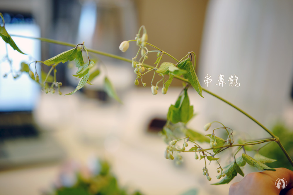 線上花藝課程-英式田園手綁花,CHING Flowers 漫遊花藝花材包送到家