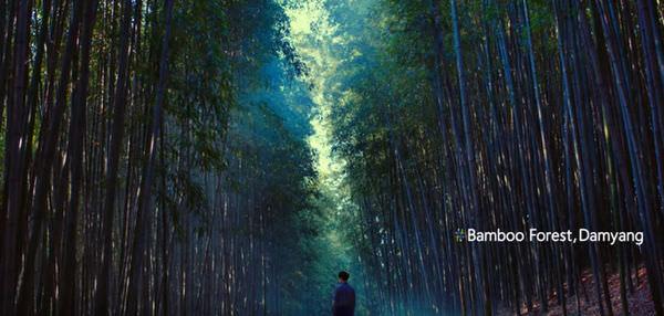 Bamboo Forest Damyang.jpg