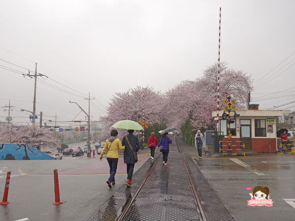 鎮海慶和車站櫻花路진해경화역벚꽃길010.jpg