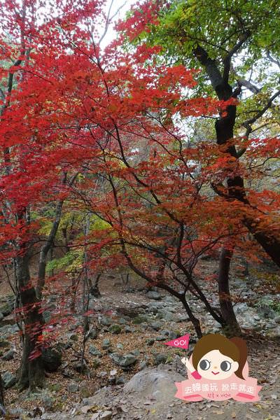 龍門山용문산관광지 046.jpg