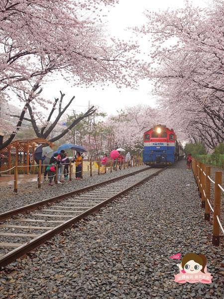 鎮海慶和車站櫻花路진해경화역벚꽃길027.jpg