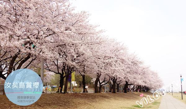 首爾景點〔915.國會議事堂站 국회의사당역〕| 春天就是要賞櫻~漢江旁汝矣島飄落浪漫櫻花雨.