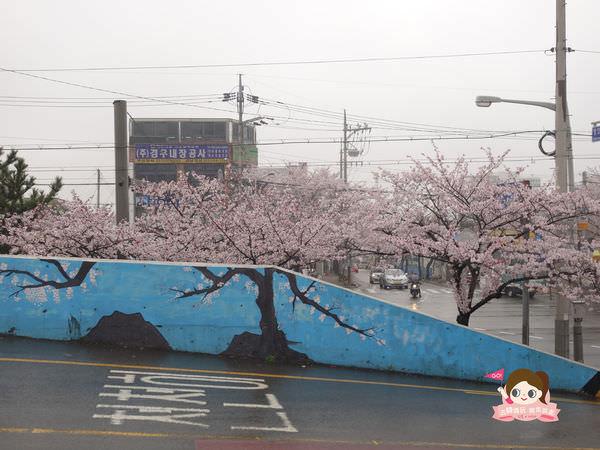 鎮海慶和車站櫻花路진해경화역벚꽃길008.jpg