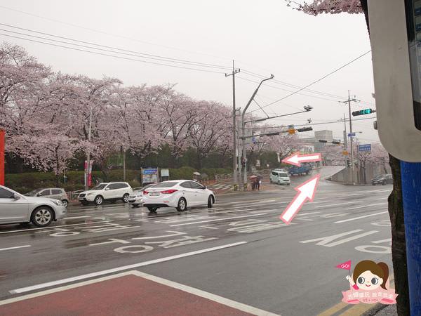 鎮海慶和車站櫻花路진해경화역벚꽃길007.jpg