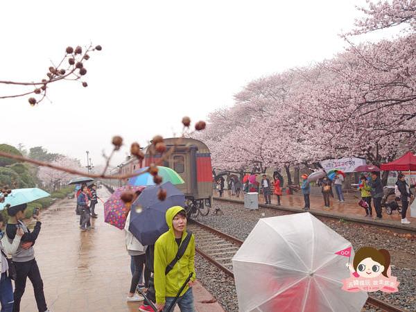 鎮海慶和車站櫻花路진해경화역벚꽃길019.jpg
