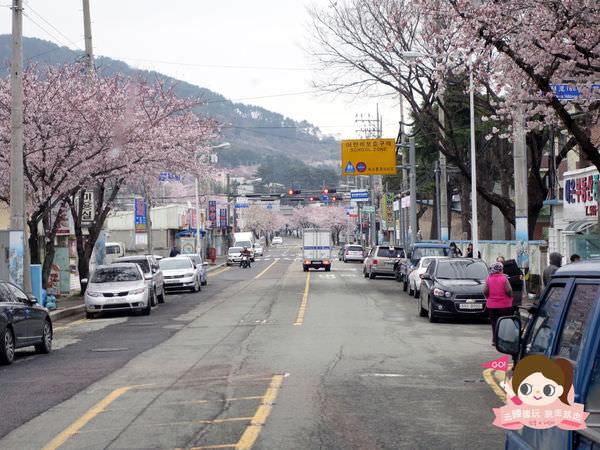 鎮海慶和車站櫻花路진해경화역벚꽃길037.jpg