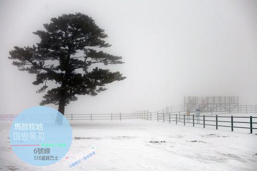 濟州島【中部】大馬路邊的天然雪場遊樂園-馬放牧地마방목지及516道路