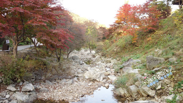 아침고요수목원4晨靜樹木園.jpg