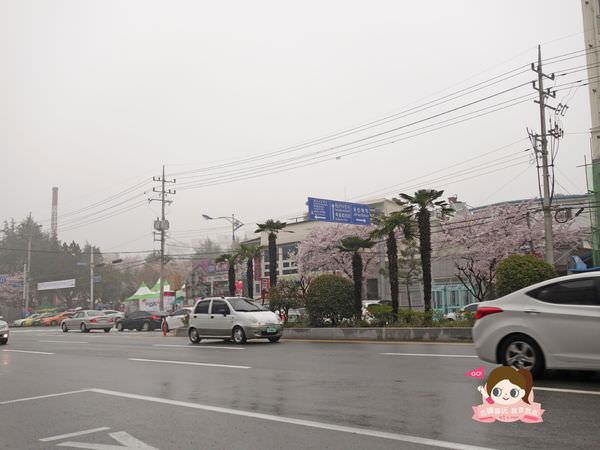 鎮海慶和車站櫻花路진해경화역벚꽃길003.jpg