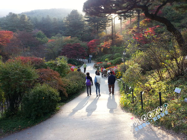 아침고요수목원1晨靜樹木園.jpg