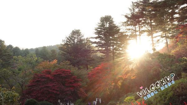 晨靜樹木園0023.jpg