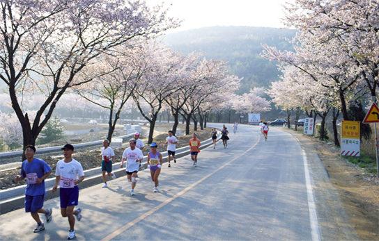 慶州櫻花馬拉松.jpg