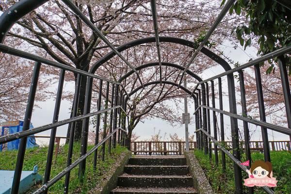 釜山沙上掛法站韓國賞櫻三樂江邊公園삼락강변공원011.jpg