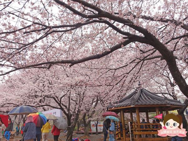 鎮海慶和車站櫻花路진해경화역벚꽃길022.jpg